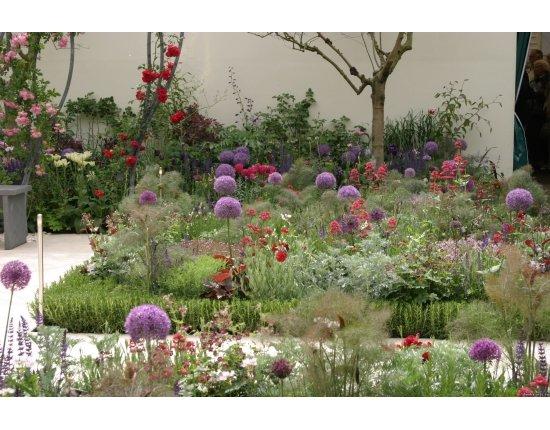Скачать Лекарственные растения в саду фото 1920x1080 px
