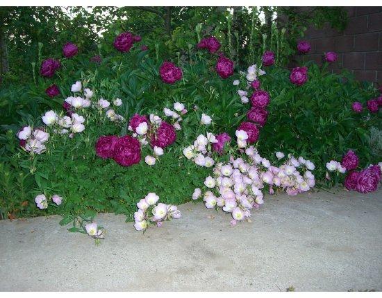Скачать Садовые цветы картинки для детского сада 1920x1080 px