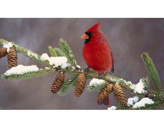 Скачать Широкоформатные обои птицы 1280x720 px