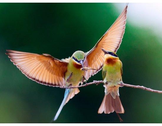 Скачать Птицы обои на рабочий стол 1024x768 px