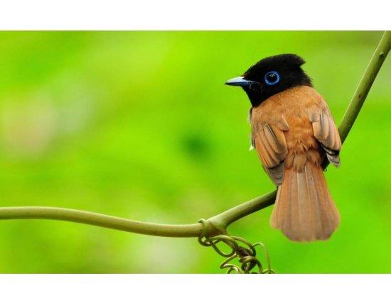 Скачать Обои райские птицы 1024x640 px