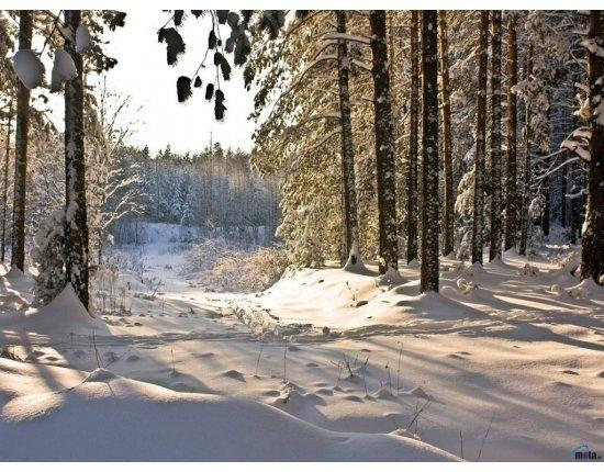 Скачать Обои лес зимой 1024x768 px