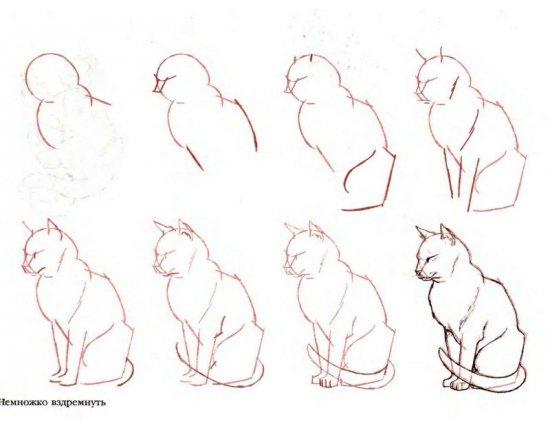 Скачать Рисунки котов карандашом прикольные 800x600 px