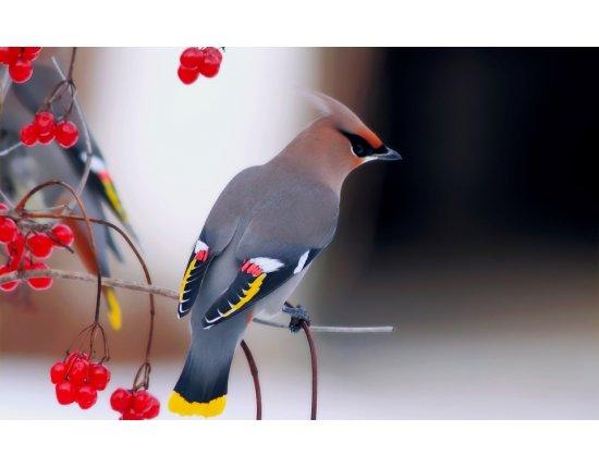 Скачать Птицы красивые обои 960x600 px