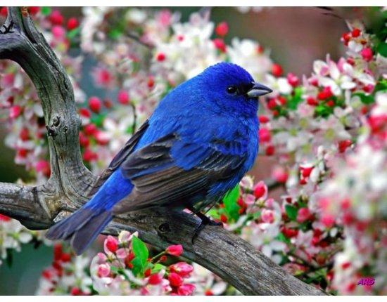 Скачать Обои на стол птицы 1024x768 px