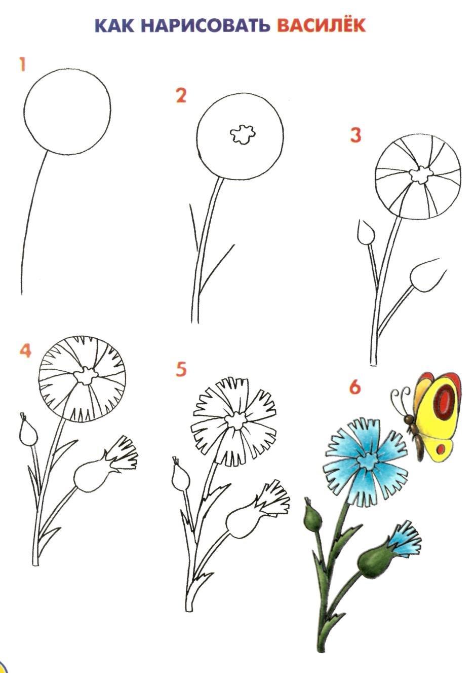 Рисуем цветы пошаговые
