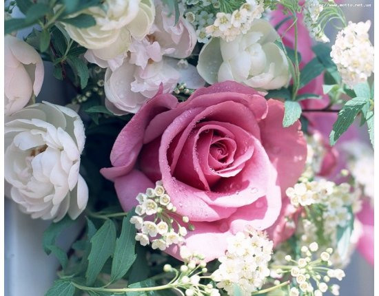 Скачать Картинки со цветами розы 800x640 px
