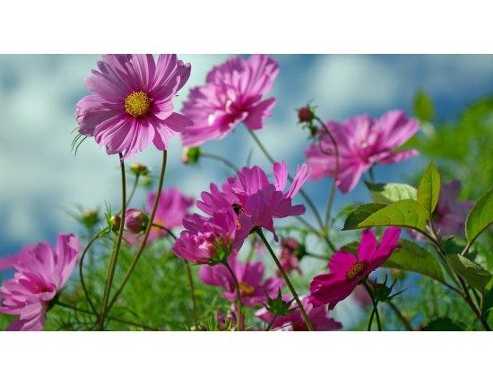 Скачать Картинки природа цветы лето 1136x640 px