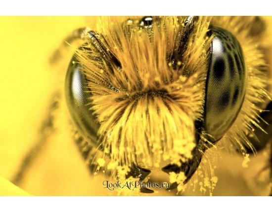 Скачать Глаза пчелы фото 1000x666 px