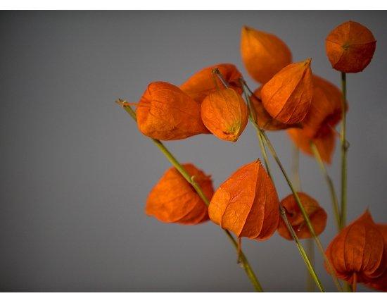 Скачать Цветы фонарики фото 1200x877 px