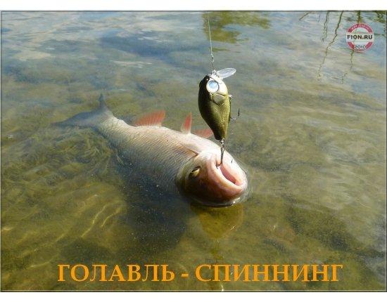 Скачать Донка из спиннинга фото 1200x879 px