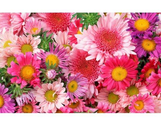 Скачать  бесплатно обои красивые цветы 1024x640 px